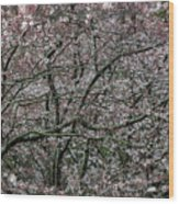 Awash In Cherry Blossoms Wood Print