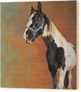 Awesome Gypsy Horse Wood Print
