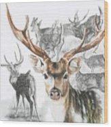 Axis Deer Wood Print