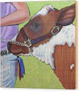 Ayrshire Show Heifer Wood Print