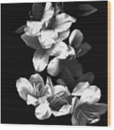 Azaela Blossom In Black And White Wood Print