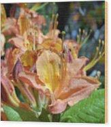 Azalea 6786 Wood Print