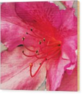 Azalea Blossom Wood Print by Jinx Farmer