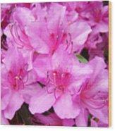 Azalea Floral Garden Fine Art Photography Baslee Troutman Wood Print