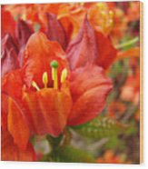 Azalea Flowers Art Prints Azaleas Gilcee Art Prints Baslee Troutman Wood Print