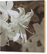 Azalea Flowers In Sepia Brown Wood Print
