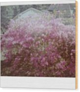 Azalea Framed By Roof Wood Print