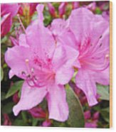 Azalea Garden Art Prints Pink Azaleas Flowers Baslee Troutman Wood Print