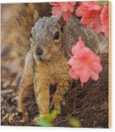 Azalea Squirrel Wood Print