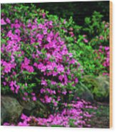 Azalea Waterfall At The Azalea Festival Wood Print