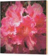 Azaleas 10 Wood Print