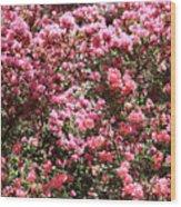 Azaleas Aplenty Wood Print