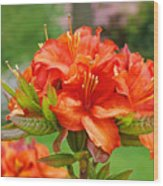 Azaleas Art Home Decor 14 Orange Azalea Flowers Art Prints Greeting Cards Wood Print