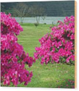 Azaleas At The Azores Wood Print