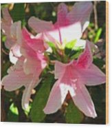 Azalea's In Bloom Wood Print