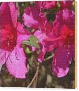 Azaleas In Magenta Wood Print
