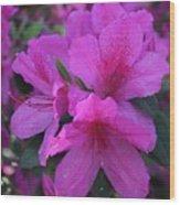 Azaleas In Springtime Wood Print
