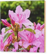 Azaleas Pink Azalea Flowers Artwork 12 Landscape Art Prints Wood Print