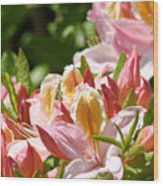 Azaleas Pink Orange Yellow Azalea Flowers 6 Summer Flowers Art Prints Baslee Troutman Wood Print