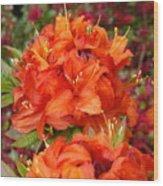 Azaleas Rhodies Art Prints Azalea Flowers Giclee Baslee Troutman Wood Print
