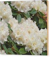 Azaleas Rhodies Landscape White Pink Rhododendrum Flowers 8 Giclee Art Prints Baslee Troutman Wood Print