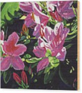 Azaleas With Dew Drop Wood Print