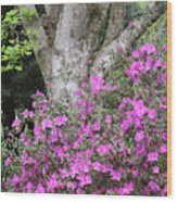Azaleas With Tree Wood Print