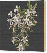 Azalia Wood Print