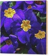 Azure Primrose Wood Print