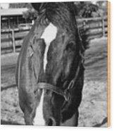 B And W Horse Headshot Wood Print