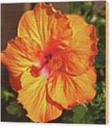 B Glavin Garden 11604 Wood Print