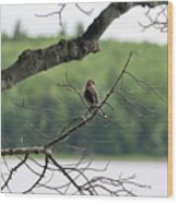 Kejimkujik National Park - Bird Wood Print