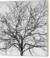 B/w Tree #1 Wood Print