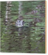 Babcock Wilderness Ranch - Alligator Lake - Heads Up Wood Print