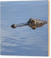 Babcock Wilderness Ranch - Alligator Lake - Waiting For Prey Wood Print