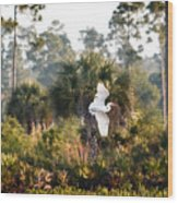 Babcock Wilderness Ranch - Gliding Great Egret Wood Print