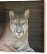 Babcock Wilderness Ranch - Portrait Of Oceola The Panther Wood Print