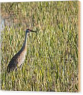 Babcock Wilderness Ranch - Sandhill Crane Wood Print