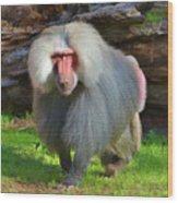 Baboon Stalking Wood Print