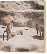 Baboons Monkeys Having Sex Wood Print