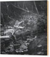 Baby Alligator Vs Mud Wasp Wood Print