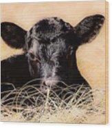 Baby Angus Calf  Wood Print