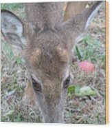 Baby Backyard Button Buck Wood Print