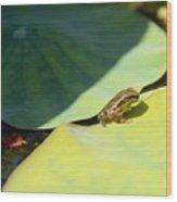 Baby Baja Tree Frog Emerges From Lotus Leaf Wood Print