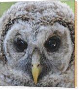 Baby Barred Owl-2 Wood Print