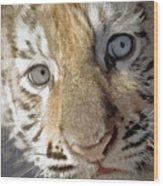 Baby Bengal Wood Print