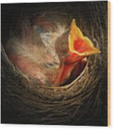 Baby Bird In The Nest With Mouth Open Wood Print