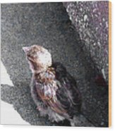 Baby Bird - Toyoung To Fly Wood Print