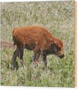 Baby Bison Wood Print