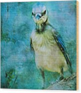 Baby Blue Jay Wood Print